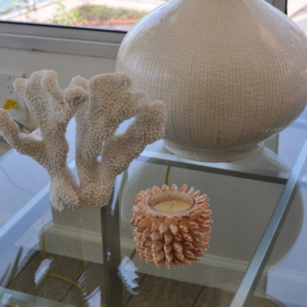 イリカイで見つけたオシャレなサンゴ