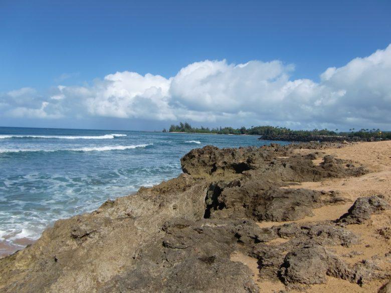 ハレイワアリイビーチパークでウミガメ