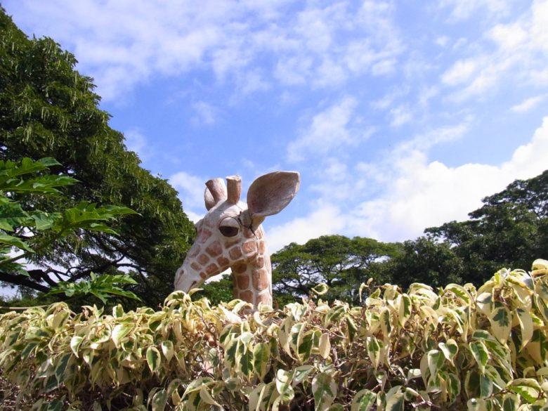 ハワイホノルルズーの偽物キリン