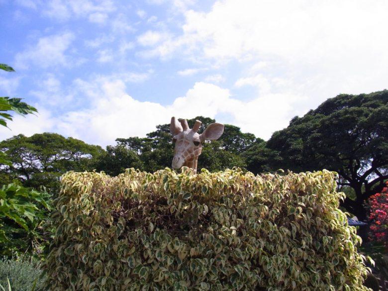 ハワイ動物園キリン