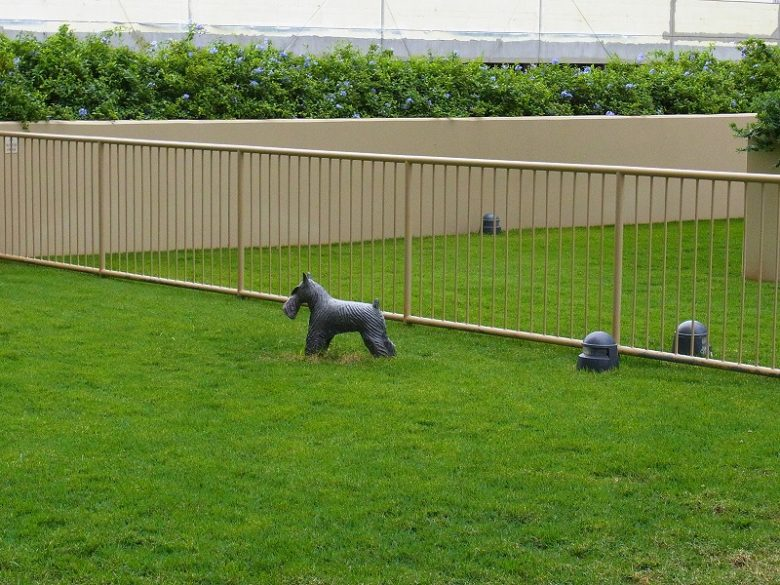ホクアの犬の遊び場