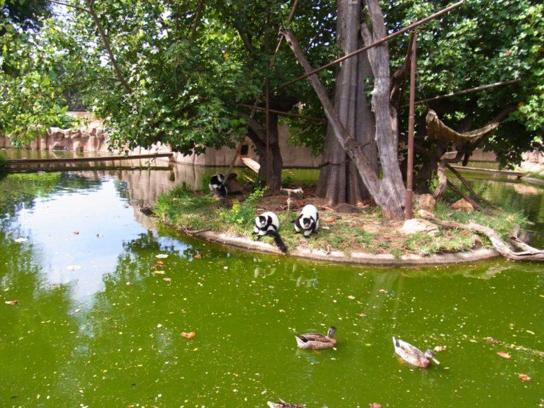 ホノルルズーの池