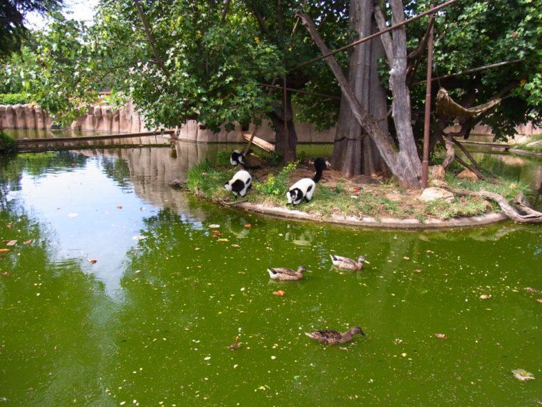 ホノルル動物園の池