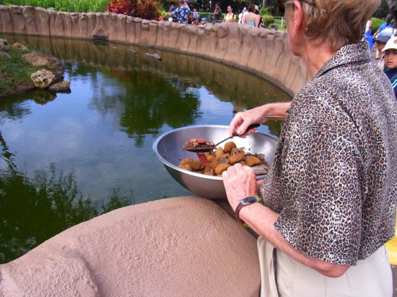 ホノルル動物園の餌やり