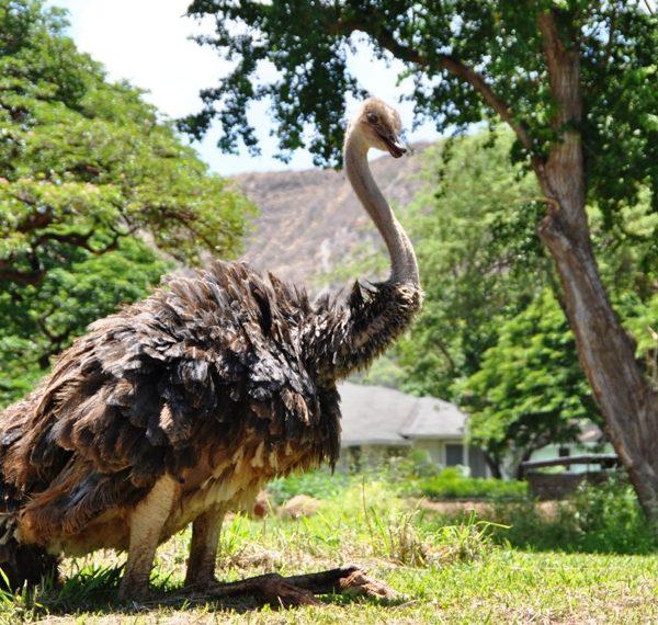 ホノルル動物園にいるカワイイ動物たち